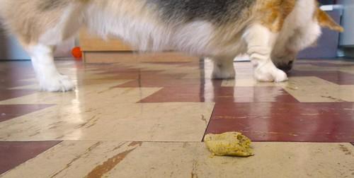 Gluten-Free Pumpkin Dog Biscuits 14