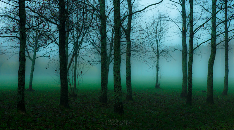 FOGGY FOREST FULL OF GREEN