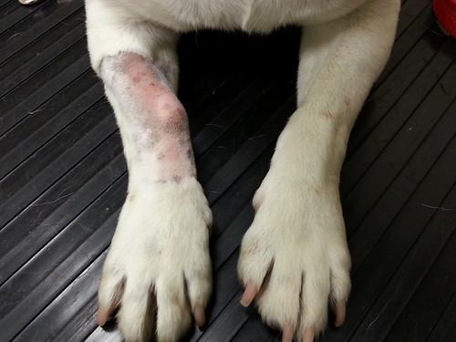 Ella's swelling