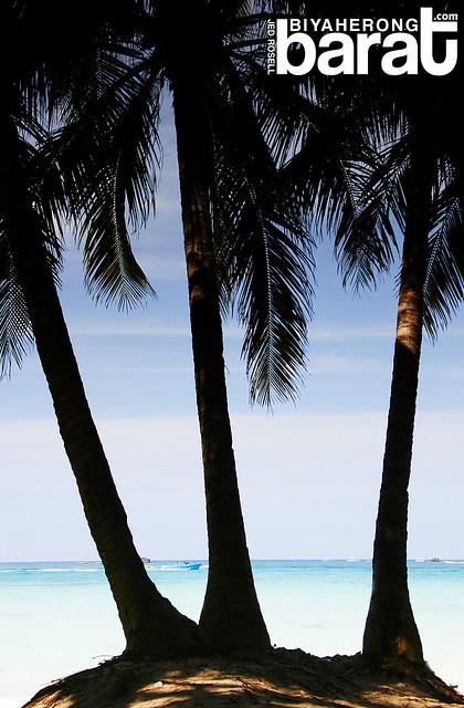 coconut trees in boracay island aklan