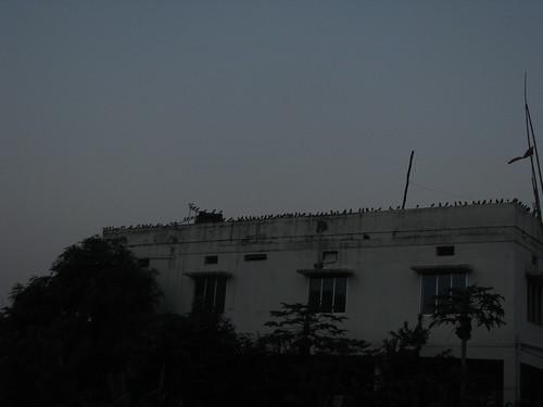 Crazy Birds by mdashf
