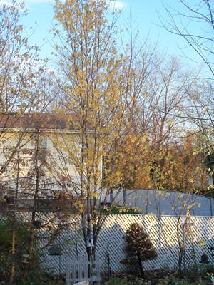 backyard_ref_portrait2_Nov_10_027