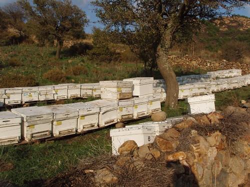 201211180172_Derekoy-H3-run-bee-hives