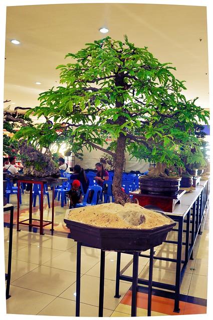 Dwarf Tree