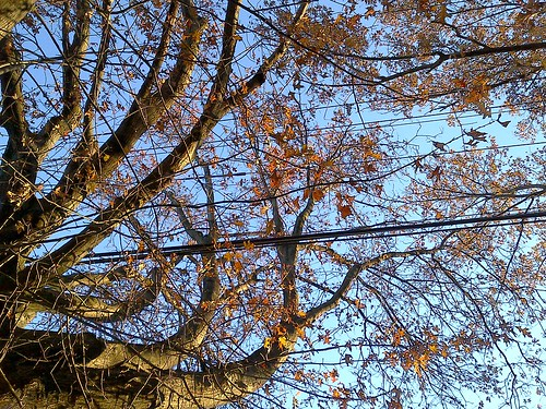 Fall sunrise - 14Nov2012