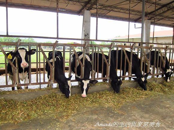 新光兆豐農場 (32)