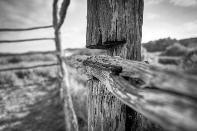 Old fence post Outback Northwest W.A ,Quobba