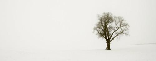 Winter Mist - In full colour!