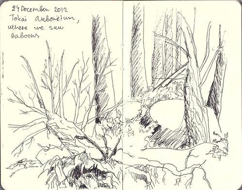 Pen sketch trees