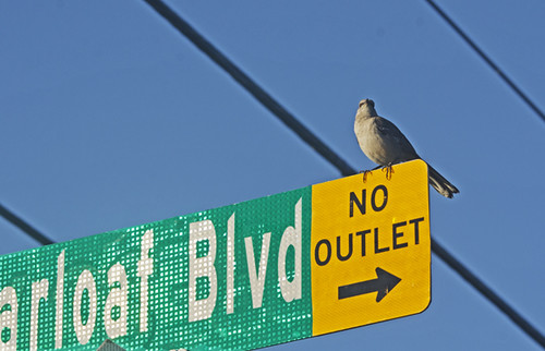 FL: Sugarloaf Boulevard