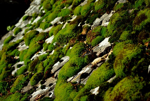 20121111-25_Moss Pillows - Roof Tiles- Snowshill Manor by gary.hadden