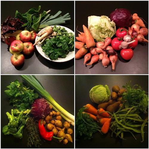 November 2012 CSA vegetables