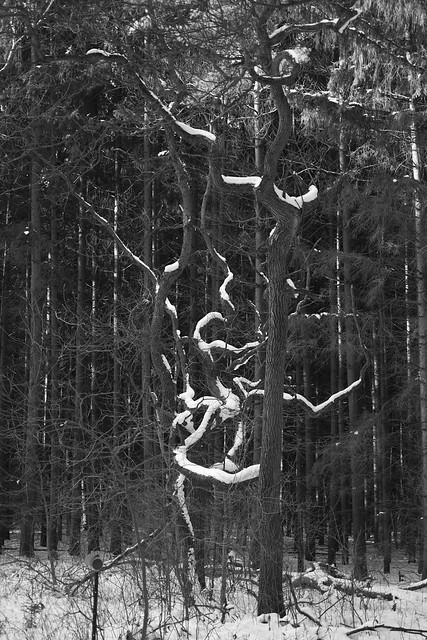 Snow in a Tree
