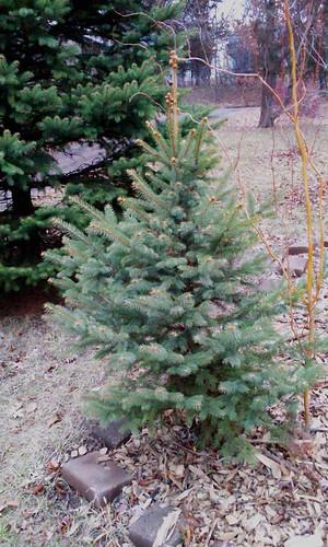 Tree  2012-12-01 14.47.11 auto