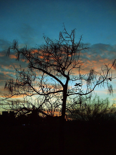 Same tree, another sunset