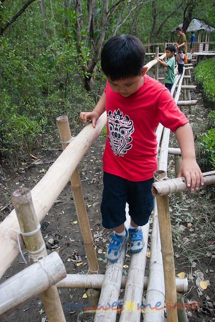 Bakhawan Eco-Park-91.jpg