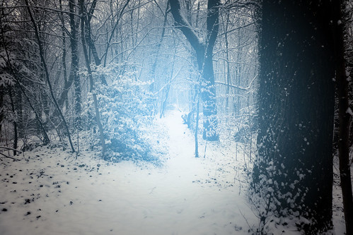Christmas is in the air (Bois de la Chartreuse, Liège) - Photo : Gilderic