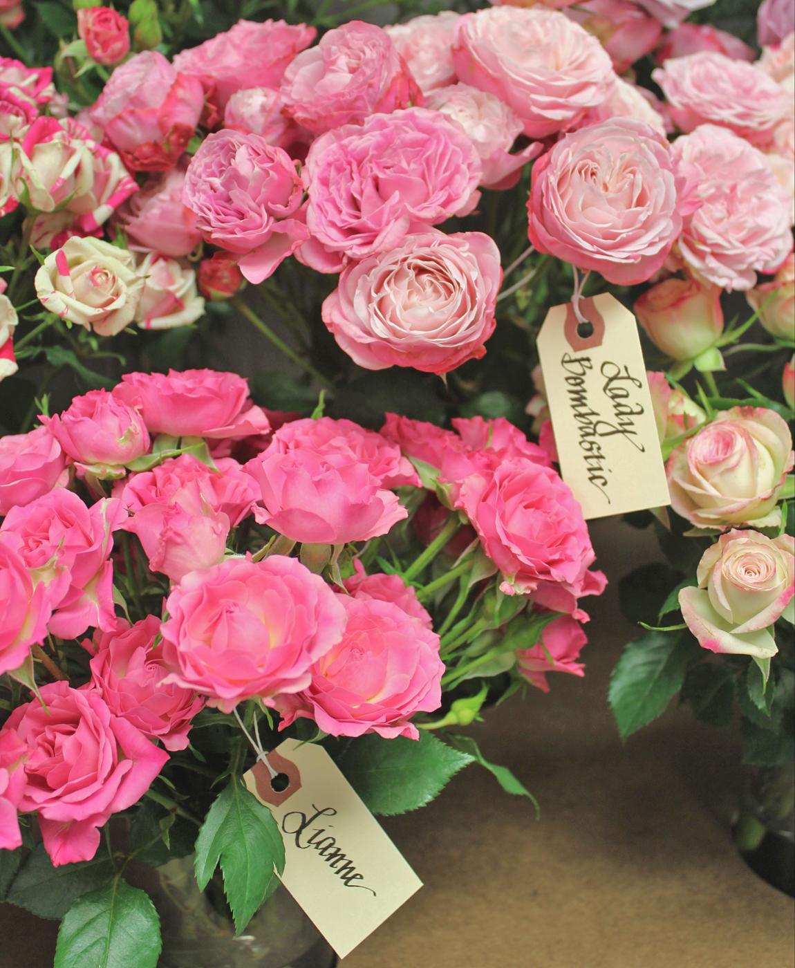 harvest-rose-5