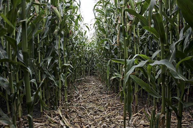inside the maze