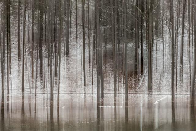 Beebe Lake: Winter