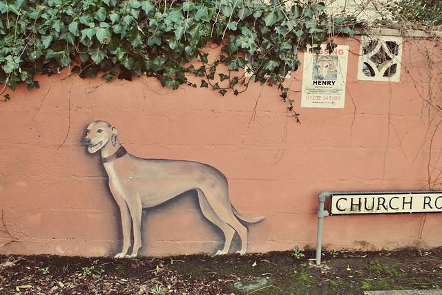 Nina Camplin lost dog