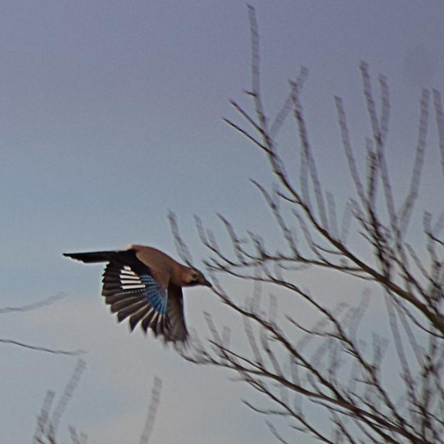 Bel oiseau <del data-recalc-dims=
