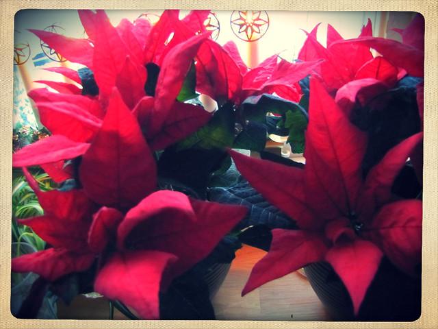 Rött till jul