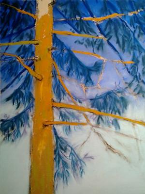 20121231_step5_pine