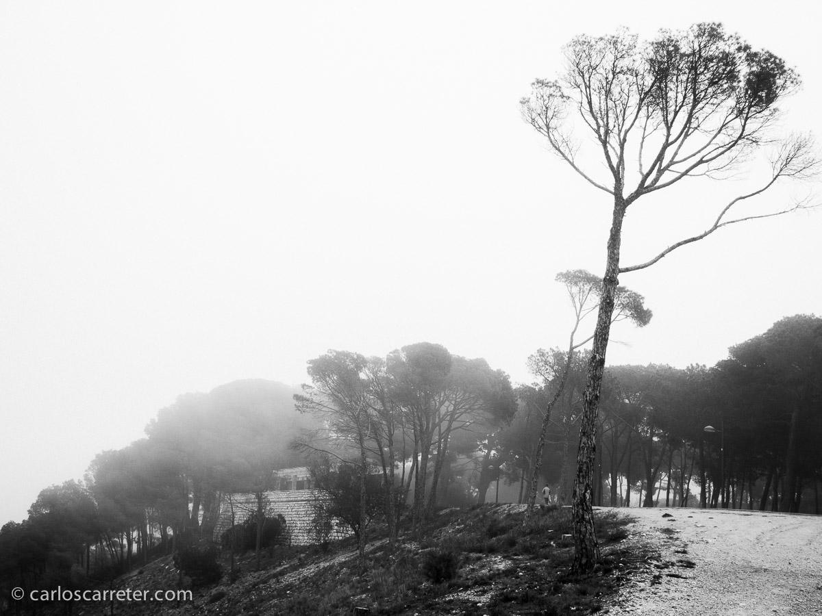 Niebla en el Parque Grande