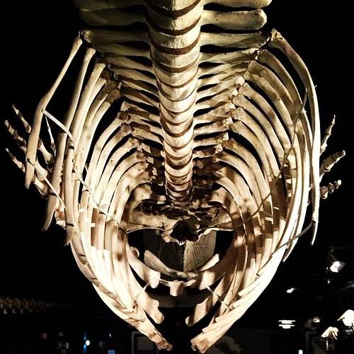 Walvis #whale #brussels