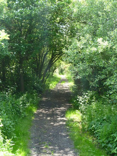 The Trail on the old railway line