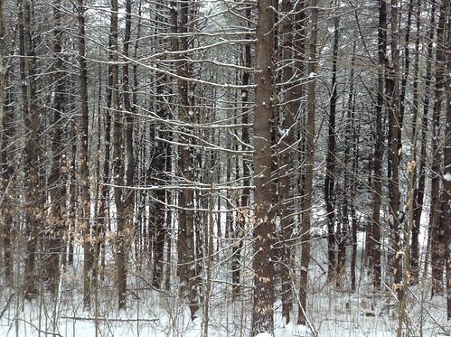 January woods