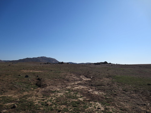 prairie dog village