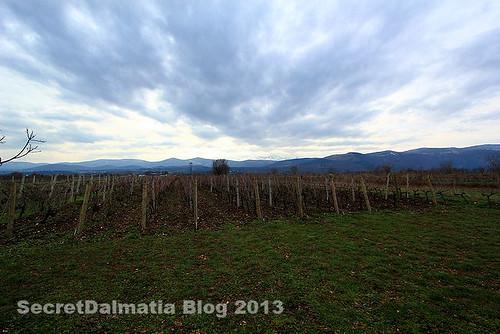 Vineyard of Grabovac