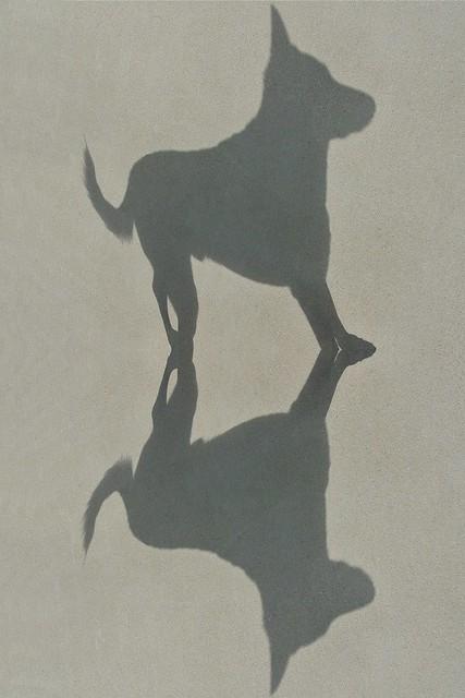 Shadow of a shadow 12/52