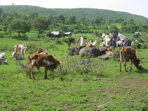Community members from Gebugesa village using grazing land for social gathering