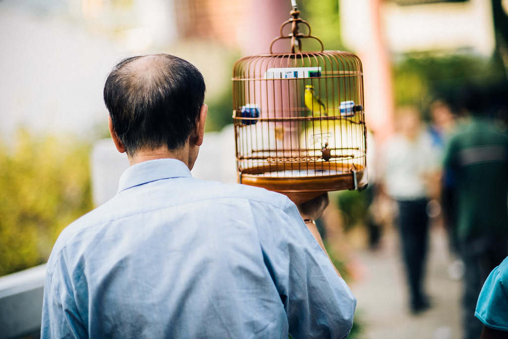 Yuen Po Street Bird Garden-18