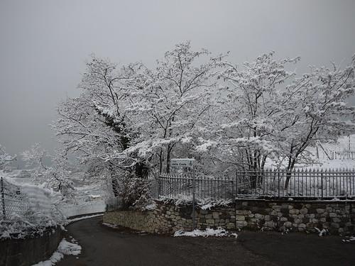 snowy way home