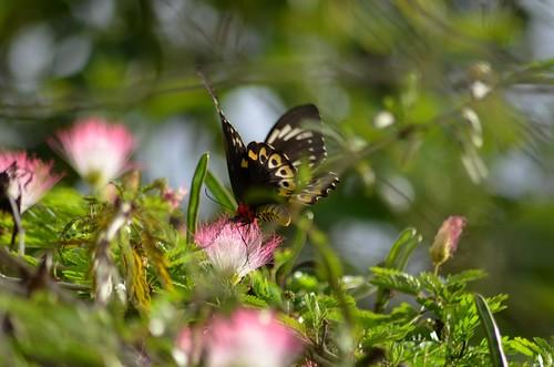butterfly landing4