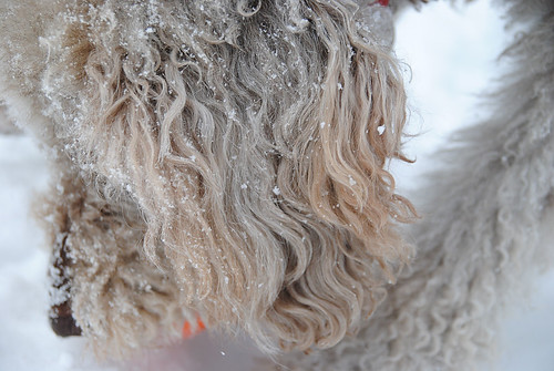 Snow Dog by Sophie Idsinga