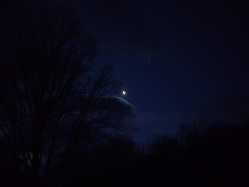 Tree, cloud, moon, star