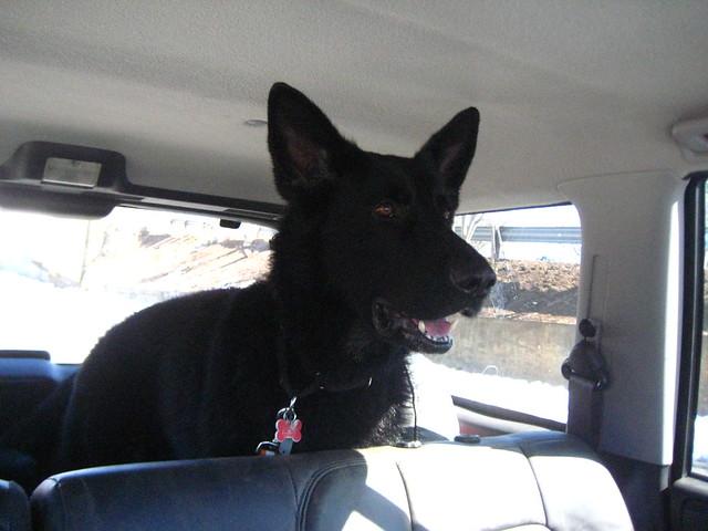 Brando in the Jeep