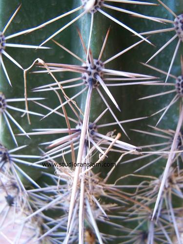 Cactus Textures (1)