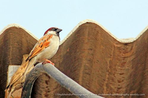 rare in Delhi.... by ShubhenduPhotography