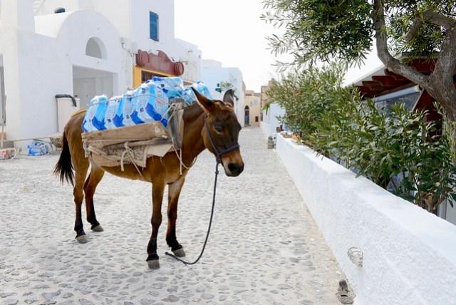 聖托里尼 (Santorini) 的城市常建在陡峭的崖邊,底下如有海港,便設以之字形陡坡往返,驢子便成為一種相當合適的交通兼運輸工具,甚至可以搭乘所謂的「驢子計程車」上下山,對當地人來說,挑重物爬山路是最主要的功能。