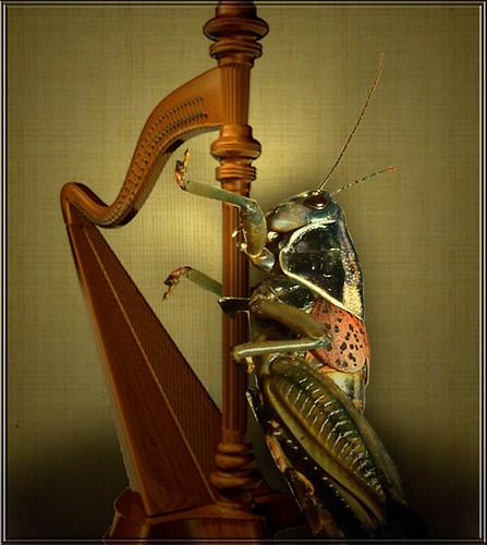 The cricket