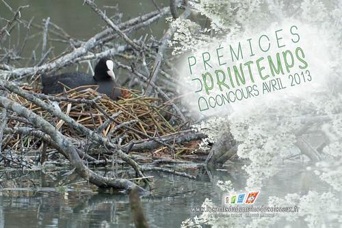 Concours photo - Avril 2013 (Domaine Des Oiseaux)