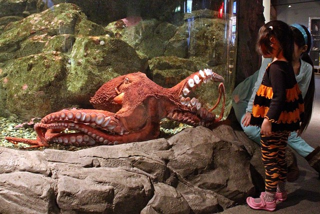 Meet the octopus: A visit to the Seattle Aquarium