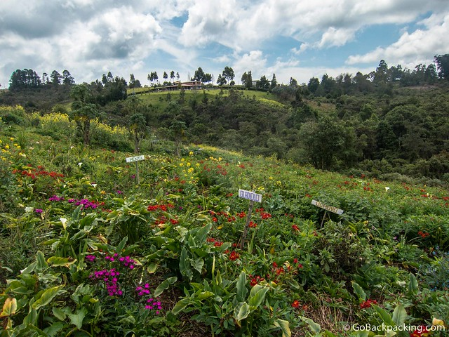A silletero's garden in Santa Elena, Antioquia