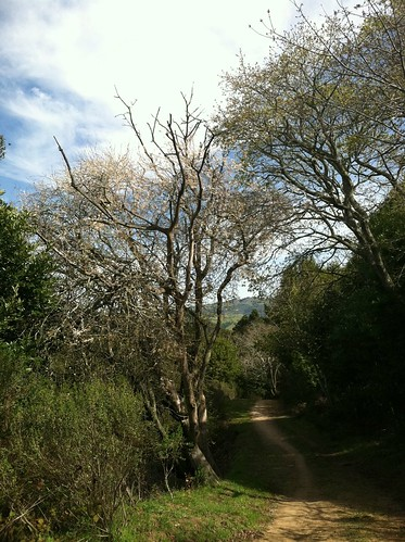 Redtail trail trees